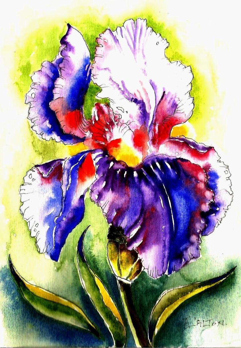 Dark Iris (2).jpg