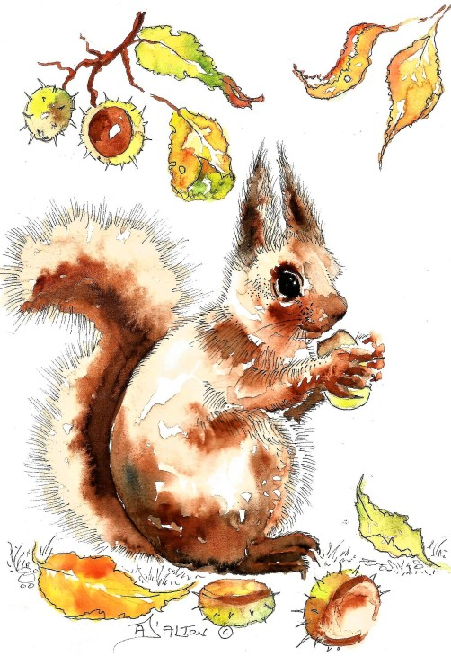 Red squirrel (2).jpg