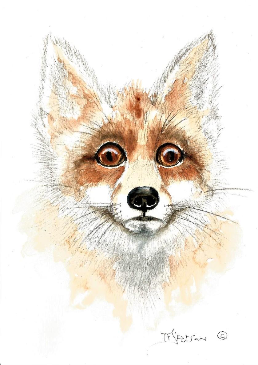 Fox a