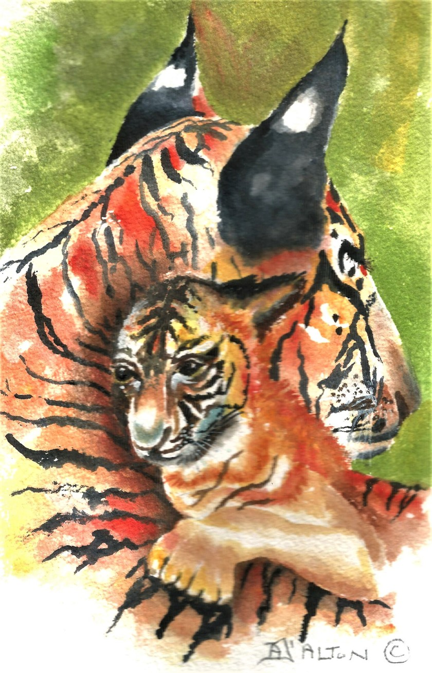 tigers colour (2).jpg